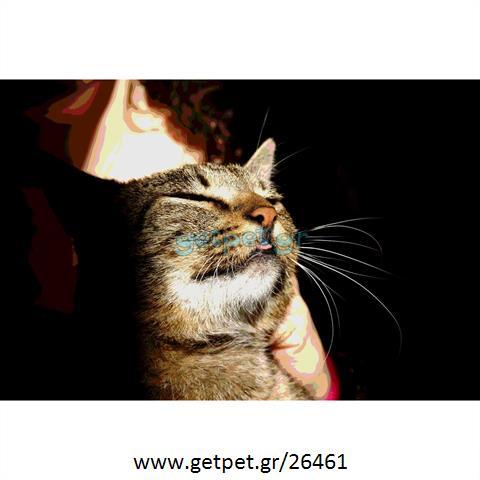 Δίνεται για υιοθεσία - χαρίζεται γάτα