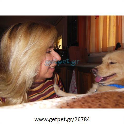 Περπατητής | Dog Walking Ίλιον Αττικής