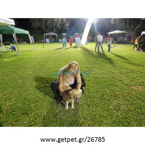 Φύλαξη | Dog Sitting Ίλιον Αττικής