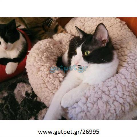 Δίνεται για υιοθεσία - χαρίζεται γάτος