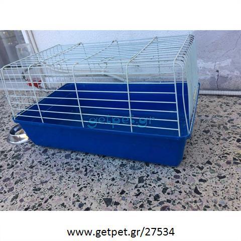Κλουβί για τρωκτικό, θηλαστικό