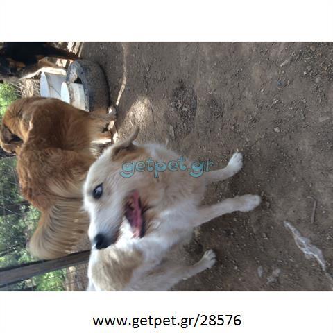 Δίνεται για υιοθεσία - χαρίζεται ημίαιμη σκυλίτσα Fox terrier - Φοξ Τερριέ