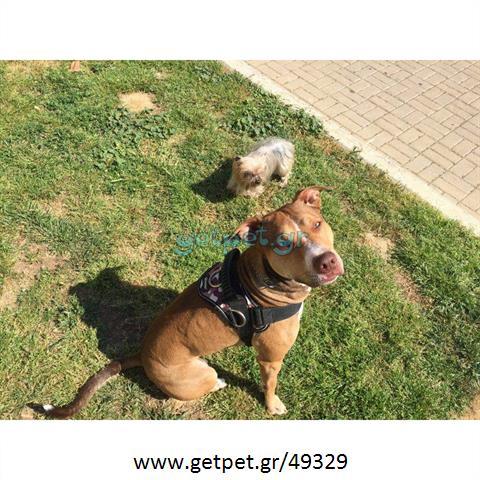 Φύλαξη   Dog Sitting Ηλιούπολη Αττικής