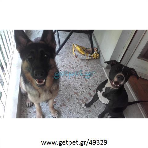 Φύλαξη | Dog Sitting Ηλιούπολη Αττικής