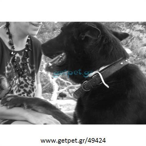 Εκπαιδευτής σκύλων Τριανδρία Θεσσαλονίκης