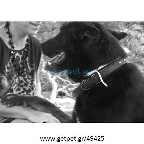 Περπατητής | Dog Walking Τριανδρία Θεσσαλονίκης