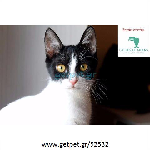 Δίνεται για υιοθεσία - χαρίζεται ημίαιμο γατάκι