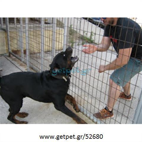 Εκπαιδευτής σκύλων Ασπρόπυργος Αττικής