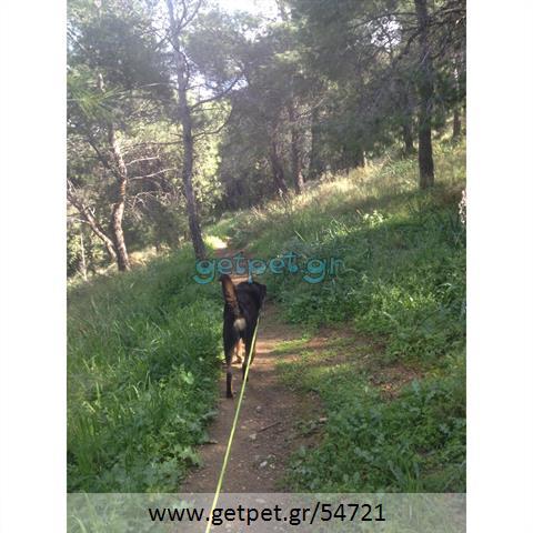 Περπατητής | Dog Walking Αργυρούπολη Αττικής