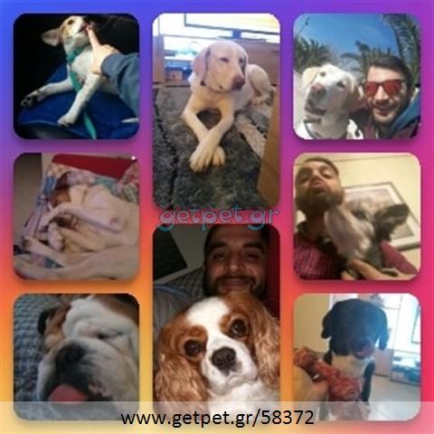 Φύλαξη | Dog Sitting Παλαιό Φάληρο Αττικής