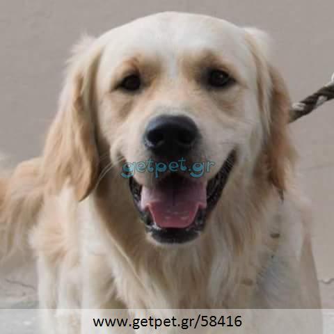 Περπατητής | Dog Walking Αθήνα Αττικής