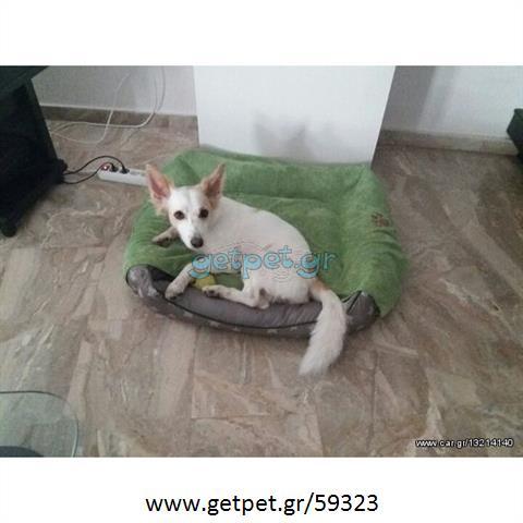 Φύλαξη | Dog Sitting Ασβεστοχώρι Θεσσαλονίκης