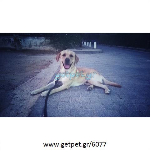 Εκπαιδευτής σκύλων Αθήνα Αττικής