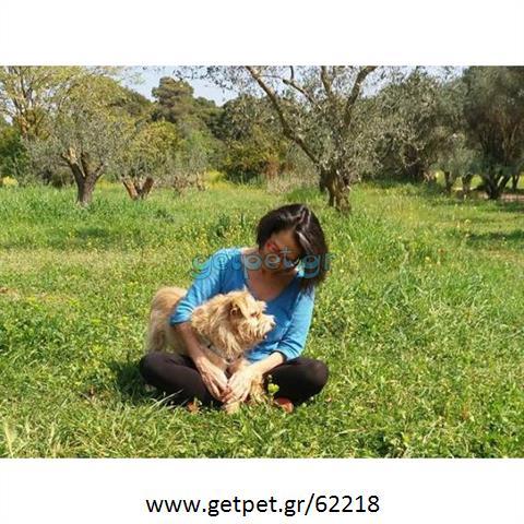 Περπατητής | Dog Walking Πεύκη Αττικής