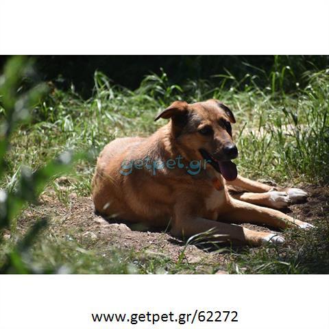 Δίνεται για υιοθεσία - χαρίζεται ημίαιμη σκυλίτσα