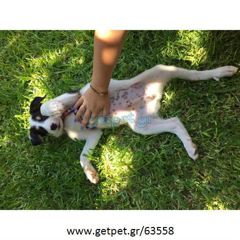 Φύλαξη | Dog Sitting Γλυφάδα Αττικής