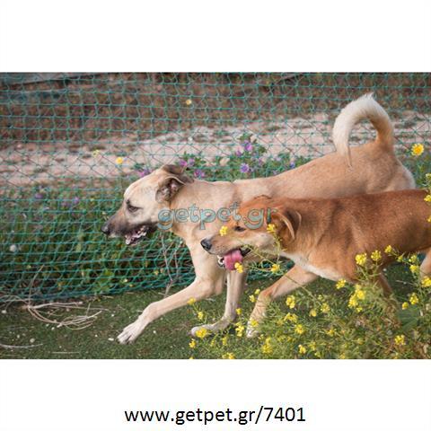 Δίνεται για υιοθεσία - χαρίζεται σκυλάκος