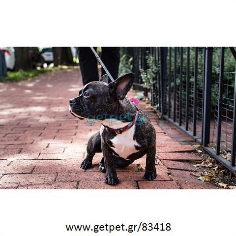 Περπατητής | Dog Walking Χαλάνδρι Αττικής