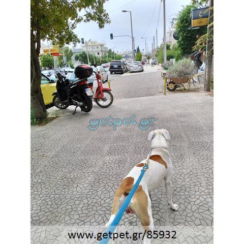 Περπατητής | Dog Walking Γλυφάδα Αττικής