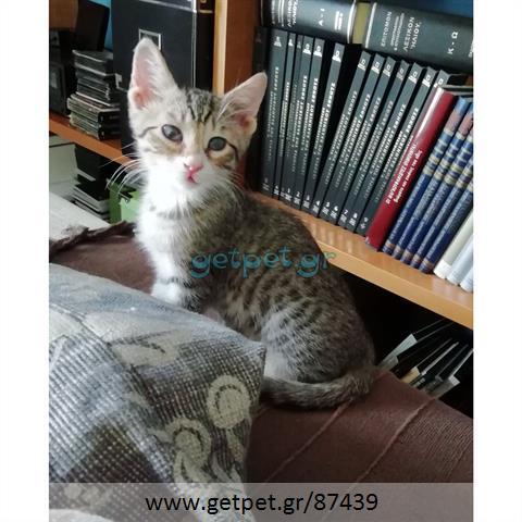 Δίνεται για υιοθεσία - χαρίζεται ημίαιμος γάτος