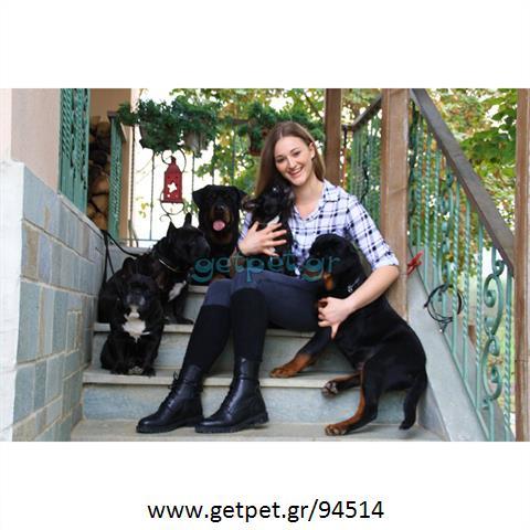 Περπατητής   Dog Walking Βασιλικά Θεσσαλονίκης Χαλκιδικής
